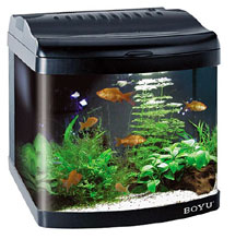 Aquarium Setup How To Set Up A Fish Tank