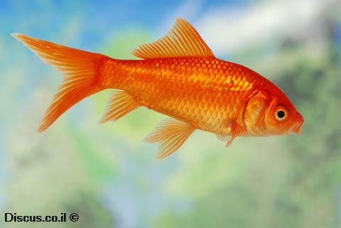 איזה חיה יכולה לראות גם קרניים אינפרא אדומות וגם אולטרא סגולות ?