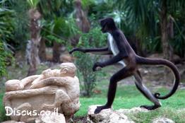 קוף-עכביש-לבן-פנים