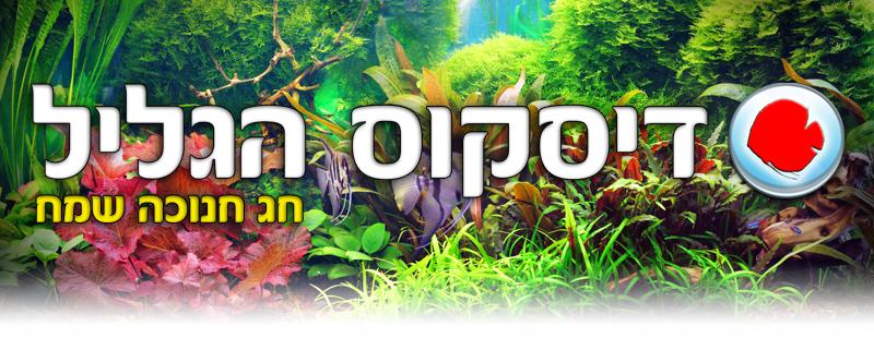 דיסקוס הגליל- דגי נוי, בריכות נוי, אקווריומים